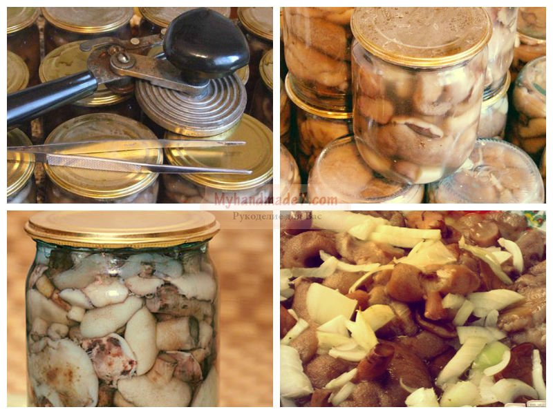 Как хранить белые грибы в домашних условиях 645