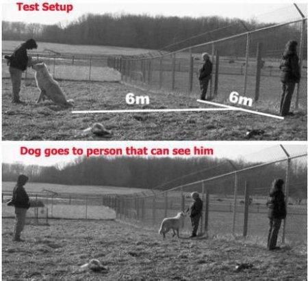 Як бачать собаки: колірний зір собак