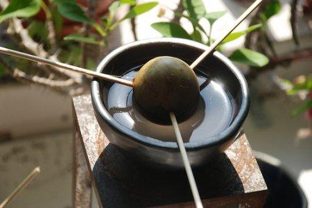 Як виростити авокадо з кісточки? Вирощування і догляд
