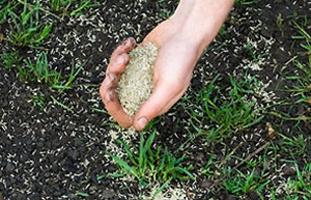 Как сделать хороший посев