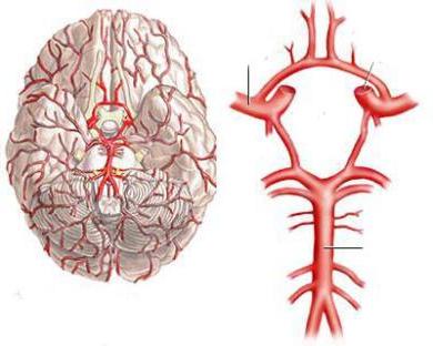Кровопостачання головного