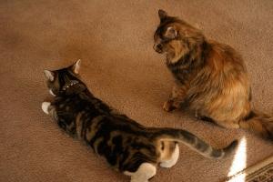 Как сделать чтобы кот разговаривал