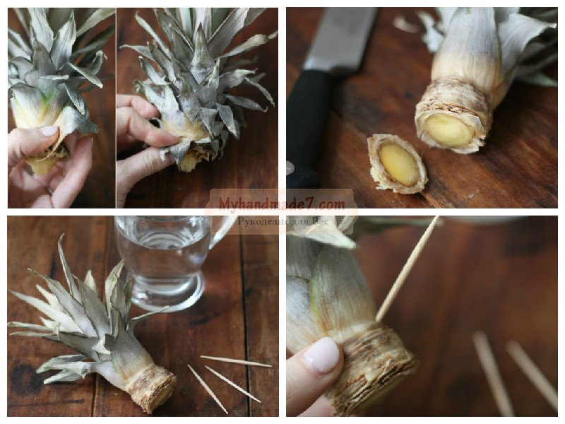 Выращиваем ананас в домашних условиях 603