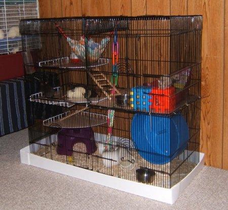 Клетка для крыс своими руками поэтапно
