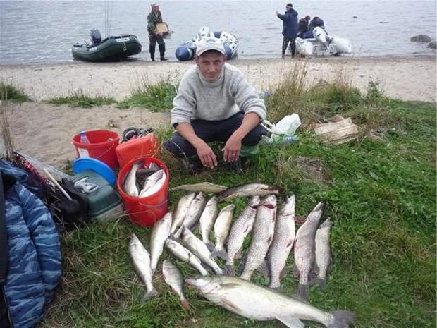 рыбалка в вологодской обл