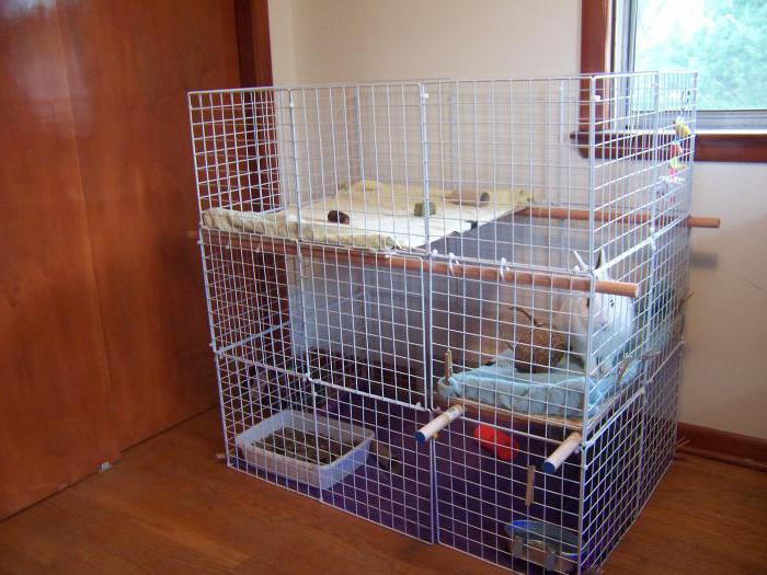 Уход и содержание в домашних условиях кролика