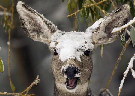 Як допомагати тваринам взимку: рекомендації, особливості годівлі і догляду