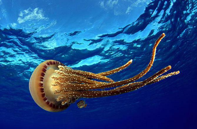 Підводний світ атлантичного океану фото