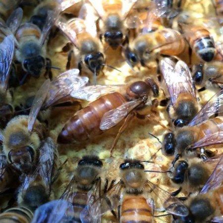когда лучше ловить пчел